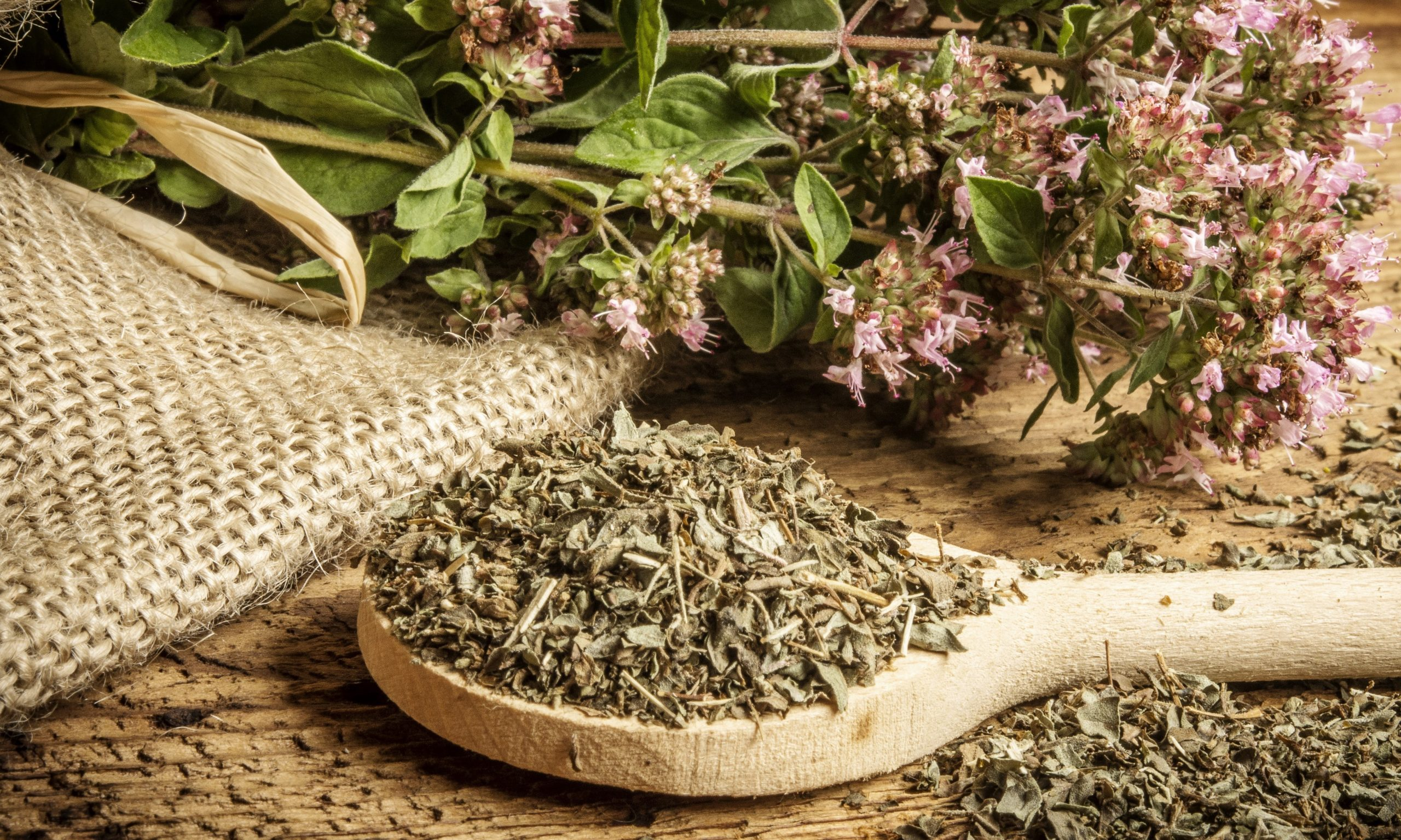 Origanum vulgare (oregano) herb – spice on a table